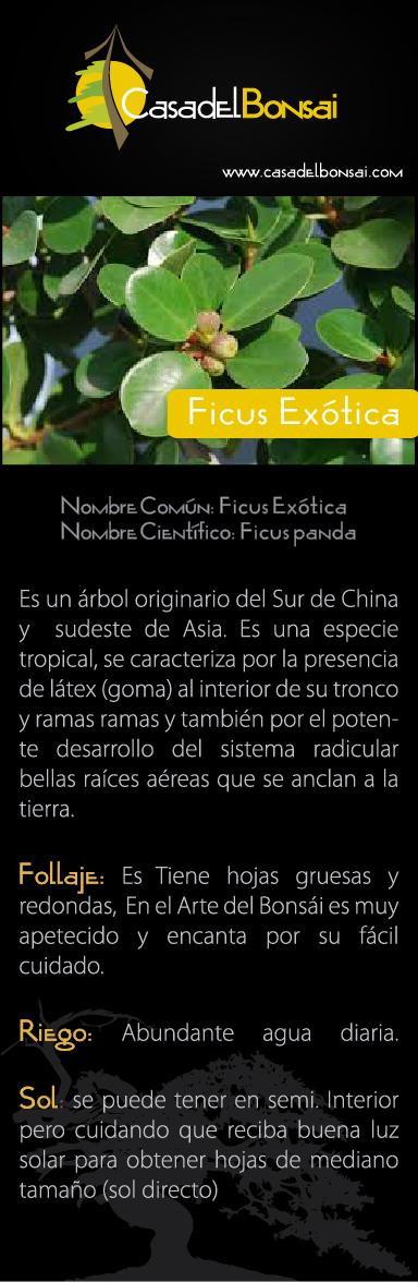 ficus exotica ficha def